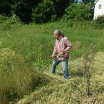 David knocking down the rye cover crop with a scythe